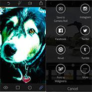 Daily App: Adobe Photoshop Express Does The Job